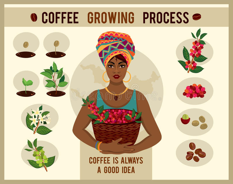 African woman is a coffee farmer with a basket of coffee berries on the coffee farm. Woman in traditional African clothes. Process of planting and growing a vector illustration