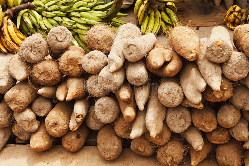 African Yams royalty free stock images