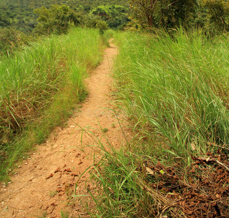 Africano Forest Trail Perspective imagens de stock royalty free