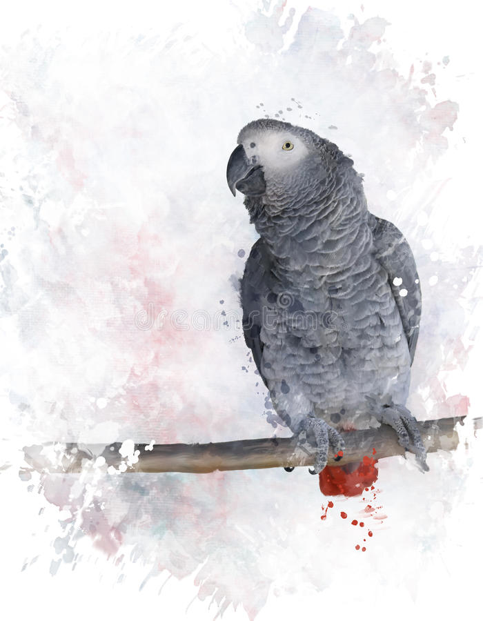 Africano Grey Parrot Watercolor libre illustration