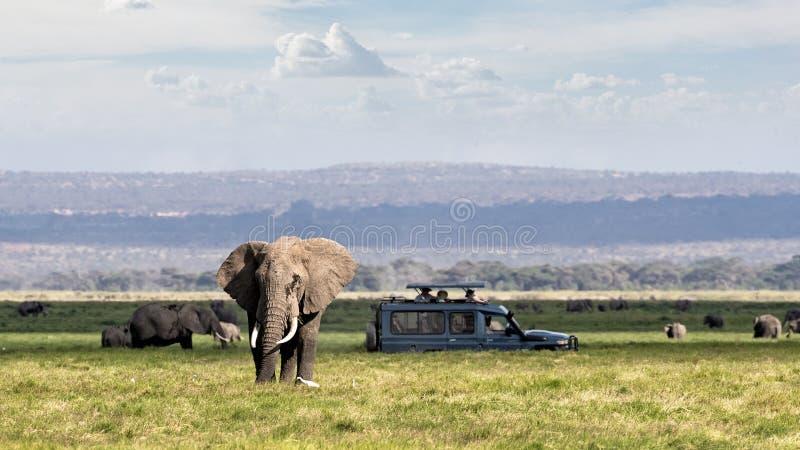 Africano Safari Adventure With Elephants e veículo fotografia de stock