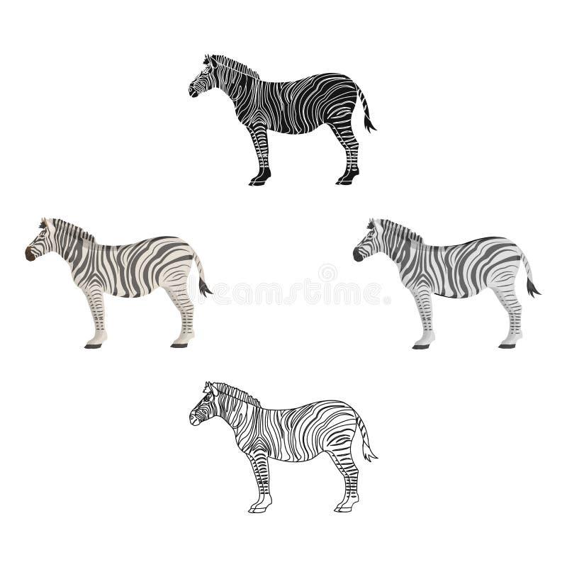 Africano, zebra do deserto Animal fender-hoofed selvagem, único ícone da zebra nos desenhos animados, estoque preto do símbolo do ilustração do vetor