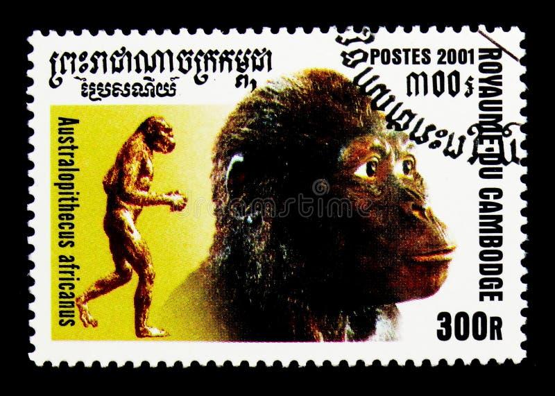 Africanus dell'australopiteco, evoluzione del serie dell'umanità, circa 2001 immagine stock