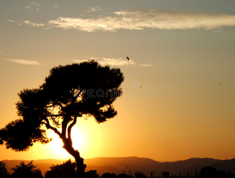 Afrika in Barcelona royalty-vrije stock foto