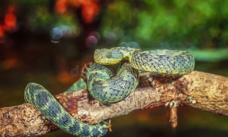 Afrika-bush-viper, fotokunst royalty-vrije stock fotografie