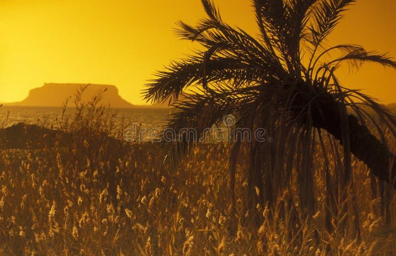 AFRIKA EGYPTEN SAHARA SIWA OAS arkivfoto