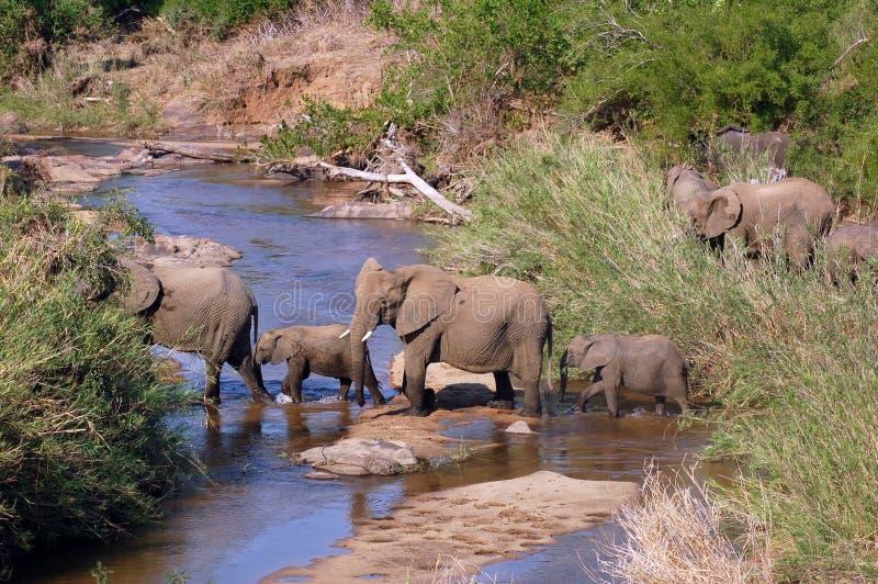 Afrika-Elefant lizenzfreies stockbild
