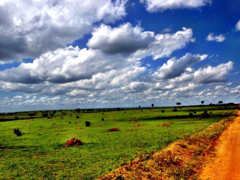 Afrika safari arkivbilder