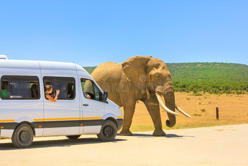 Afrika Safari Tour royaltyfri bild