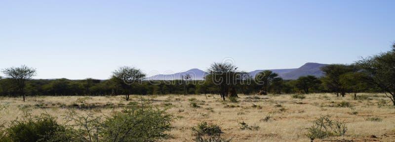 Afrikaans Bush -Bush-veld en weidelandschap met acaciabomen en purper-blauwe bergen erachter bij Okonjima-Natuurreservaat, Namibi royalty-vrije stock afbeeldingen