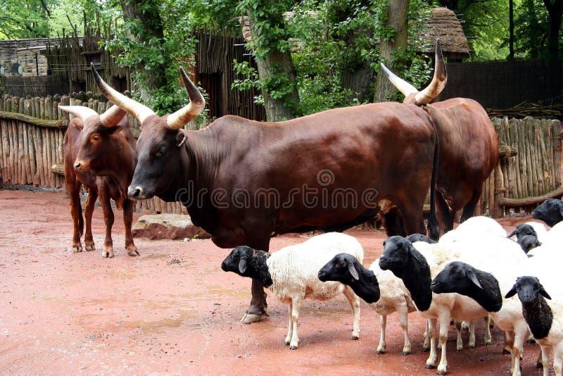 Download Afrikaans Landschap stock foto. Afbeelding bestaande uit prairie - 297448
