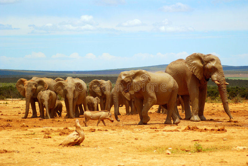 Afrikaans landschap royalty-vrije stock foto's