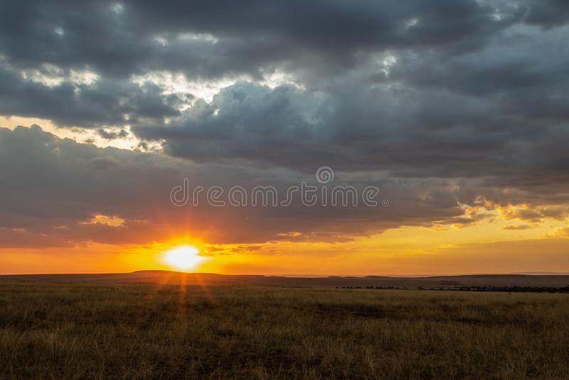 Afrikaans landschap met lang gras en donkere wolken bij zonsondergang stock afbeeldingen