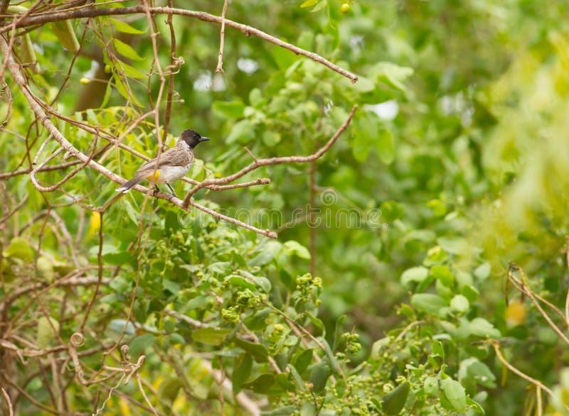 Afrikaans Regenwoud royalty-vrije stock foto's