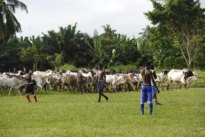 Afrikaans voetbalteam tijdens opleiding royalty-vrije stock foto