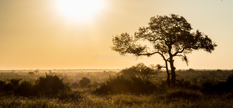 Afrikaanse Achtergrond royalty-vrije stock afbeelding