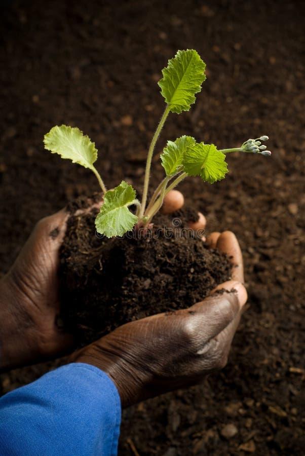 Afrikaanse Amerikaanse Landbouwer met Nieuwe Installatie royalty-vrije stock afbeeldingen