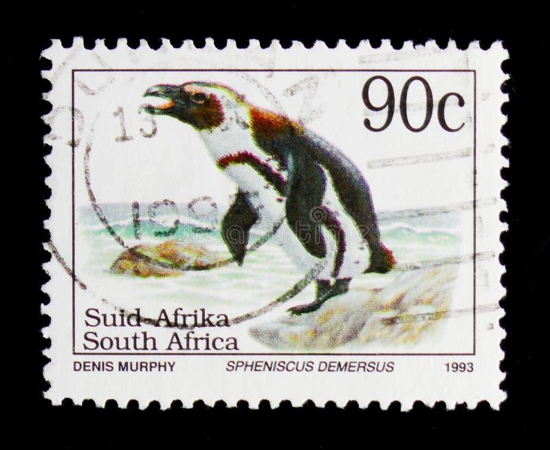Afrikaanse demersus van Pinguïnspheniscus, Definitives Bedreigde Animalsserie, circa 1995 stock afbeeldingen