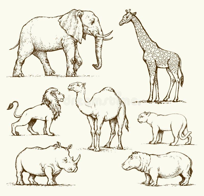 Afrikaanse dieren Vector tekening vector illustratie