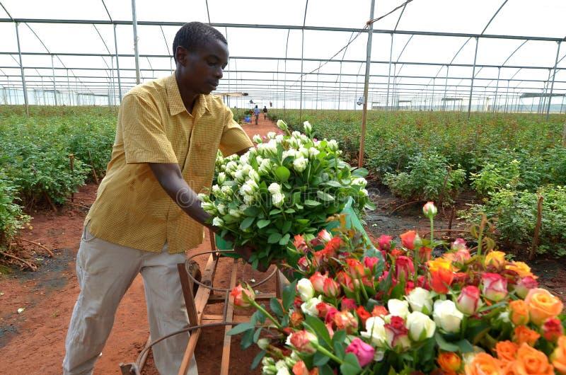 Afrikaanse landbouwer royalty-vrije stock afbeelding