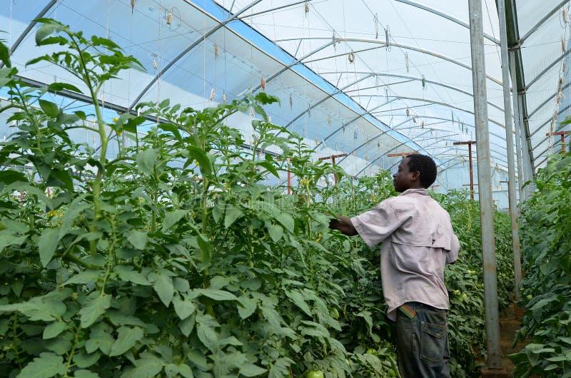 Afrikaanse landbouwer stock foto