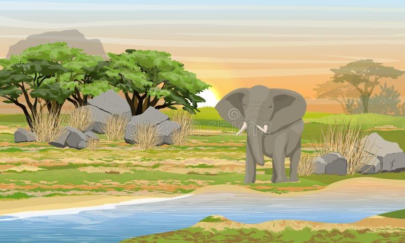 Afrikaanse olifant bij een bar Savanne, rivier, grote stenen, bergen en een acaciaboom vector illustratie