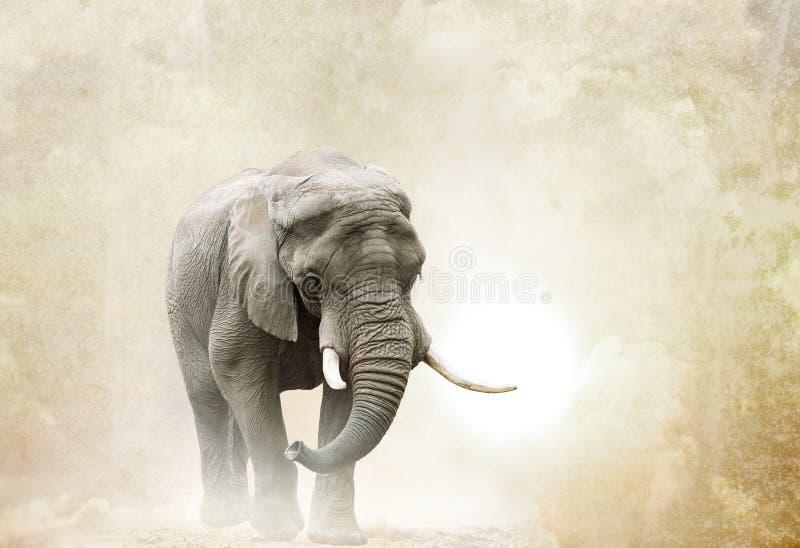 Afrikaanse olifant die in woestijn lopen stock foto's