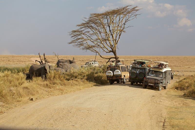 Afrikaanse safari royalty-vrije stock foto