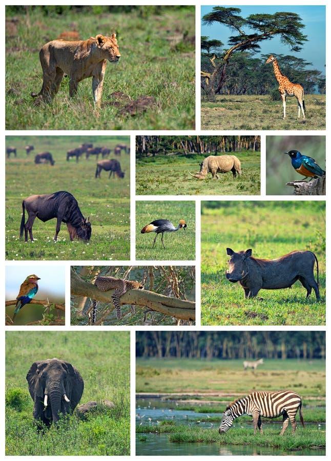 Afrikaanse safari royalty-vrije stock afbeeldingen