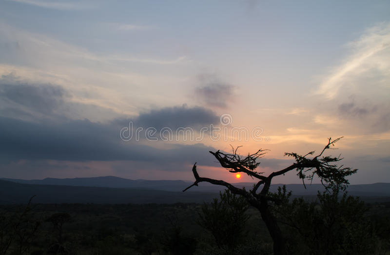 Afrikaanse struikzonsondergang stock afbeeldingen