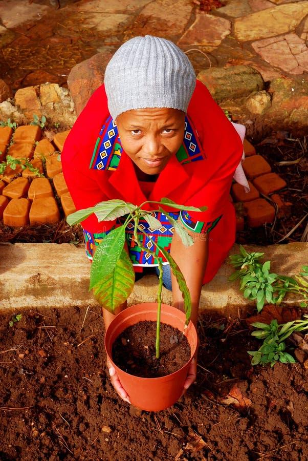 Afrikaanse vrouwelijke planter