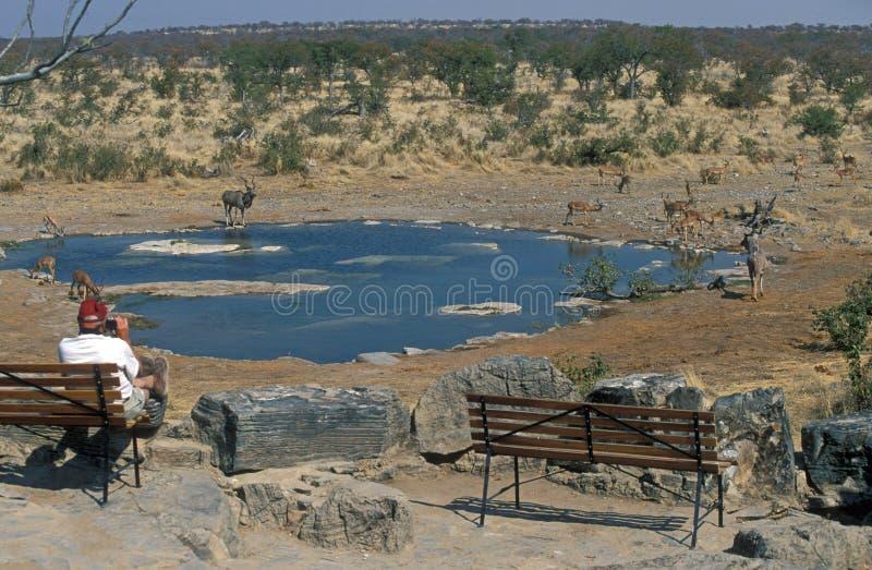Afrikaanse Waterhole royalty-vrije stock afbeelding