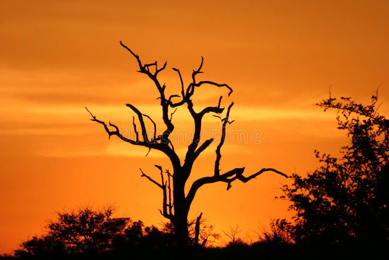Afrikaanse zonsondergang 2 royalty-vrije stock fotografie