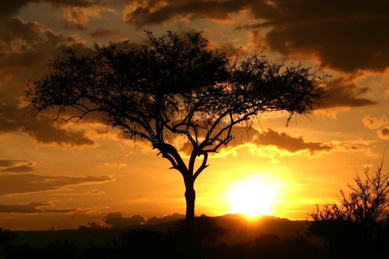 Afrikaanse Zonsondergang. Tanzania, Afrika royalty-vrije stock afbeeldingen