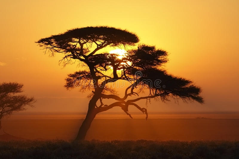 Afrikaanse Zonsopgang - Namibië royalty-vrije stock foto