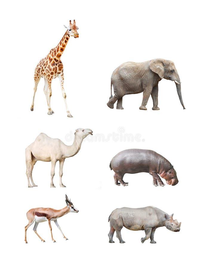 Afrikaanse Zoogdieren royalty-vrije stock foto
