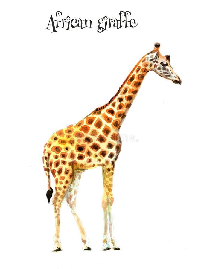 Afrikan giraffe1 illustrat?ren f?r illustrationen f?r handen f?r borstekol g?r teckningen tecknade som look pastell till traditio stock illustrationer