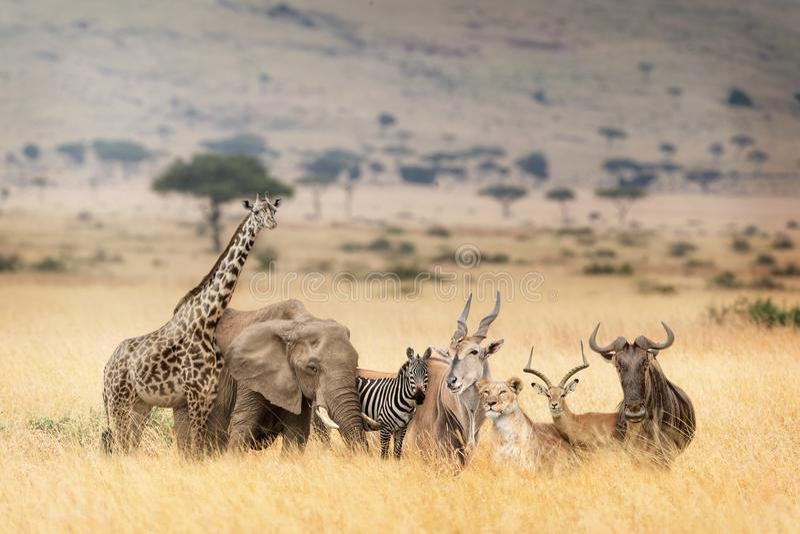 Afrikan Safari Animals i den drömlika Kenya platsen royaltyfria foton