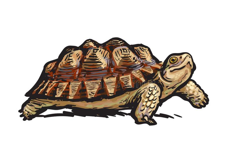 afrikan sporrad sköldpadda Gladlynt gå för sköldpadda Realistisk hand dragen vektorillustration vektor illustrationer