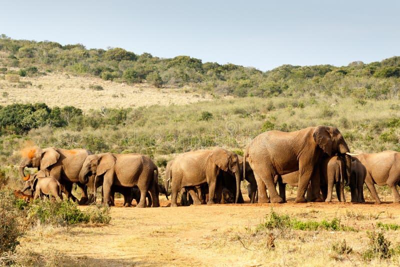 Afrikaner-Bush-Elefantschlammbad lizenzfreie stockfotos