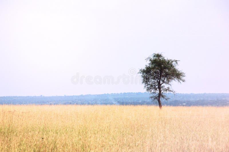 Afrikanische Ebenen-Landschaft stockbild