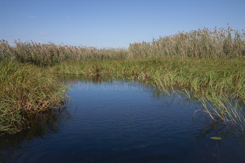 Afrikanische Landschaft: Blauer Himmel, blaues Delta, hohe Schilfe stockbild