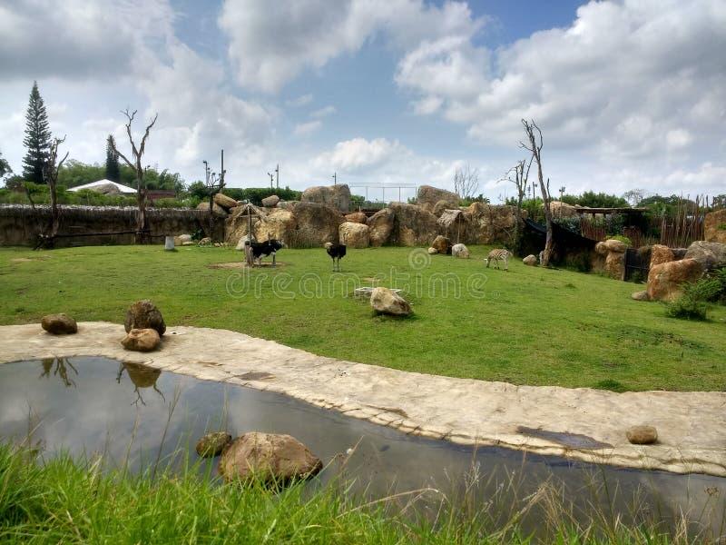 Afrikanische Landschaft im Zoo stockfoto