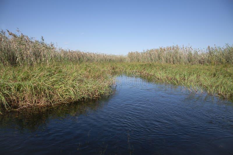 Afrikanische Landschaft: Schilfe entlang dem Delta-Fluss lizenzfreie stockbilder
