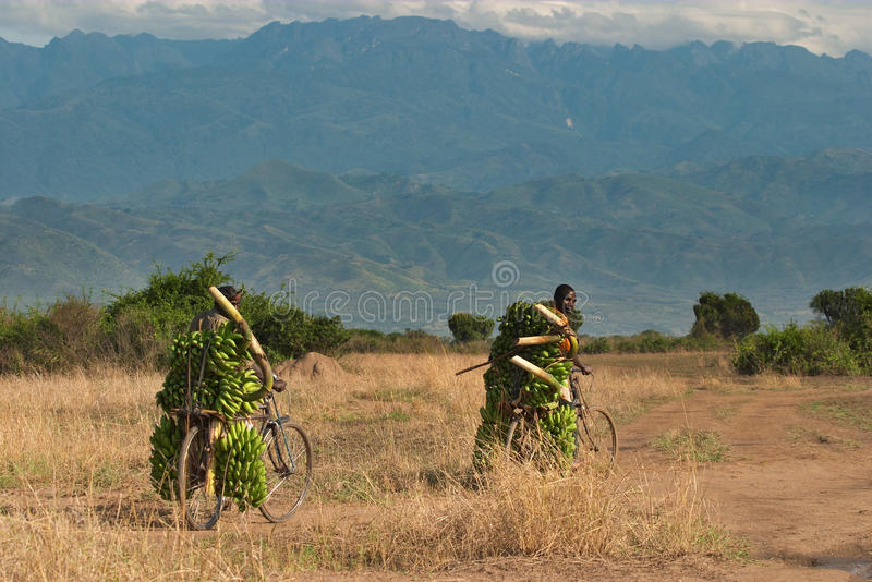 Afrikanische Landwirte mit Bananen stockfoto