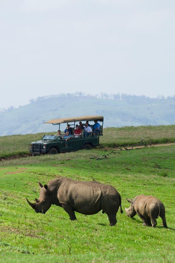 Afrikanische Rhinos lizenzfreie stockfotos