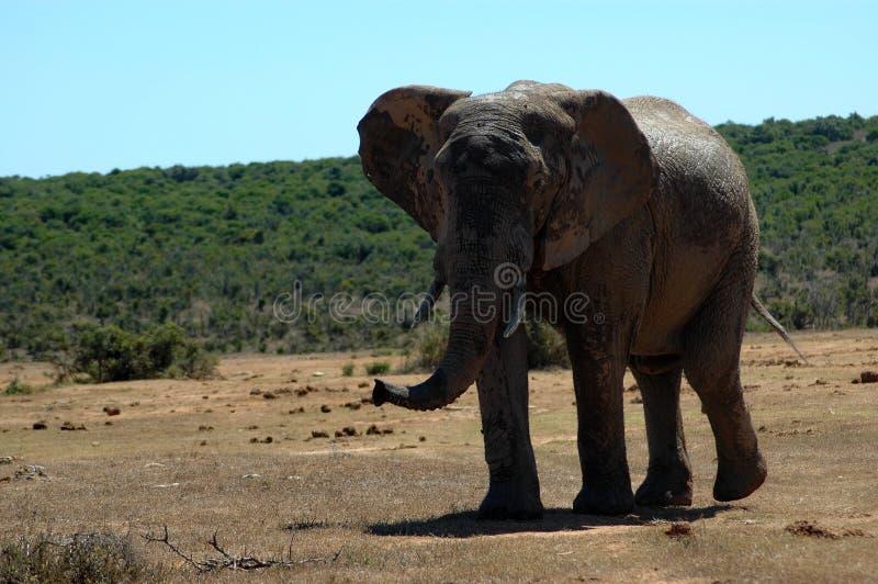 Afrikanische wild lebende Tiere stockfotos