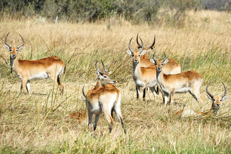 Afrikanische wild lebende Tiere lizenzfreie stockbilder