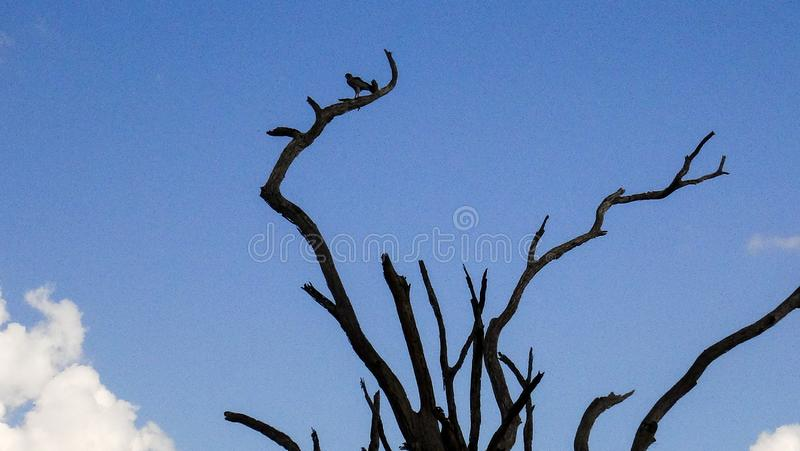 Afrikanischer Baum im Sommer mit Vogel lizenzfreie stockfotos