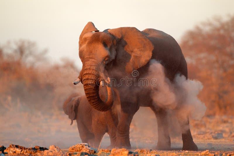 Afrikanischer Elefant bedeckt im Staub lizenzfreie stockfotografie